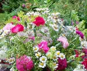 Gradina-de-flori-in-luna-iulie.jpg