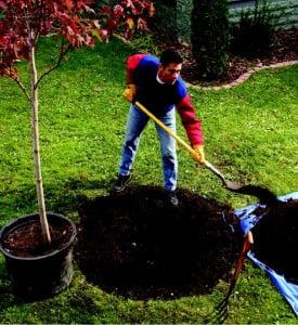 Plantarea-unui-copac-275x300.jpg
