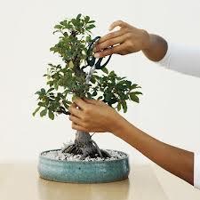 Cum-tundeti-bonsaiul.jpg