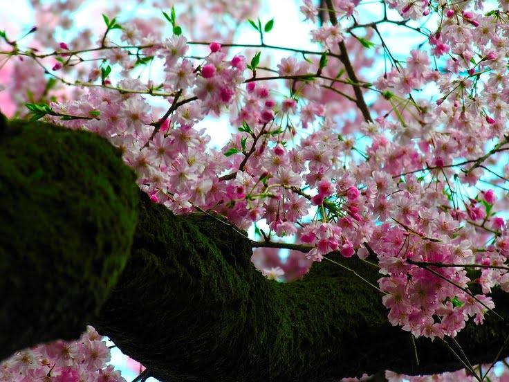 Florile de cires, Foto: toplowridersites.com