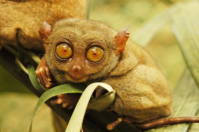 Animale mici de companie Foto: www.animalslook.com