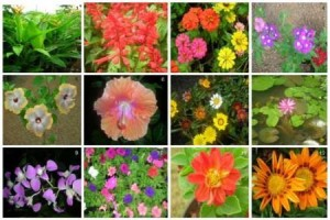 ornamental-flori-300x200.jpg
