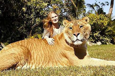 Cea-mai-mare-felina-din-lume