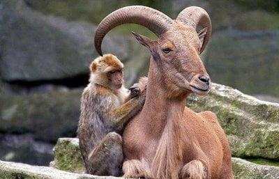 Animale-amuzante-dragute-si-ciudate10