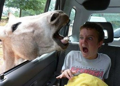 Animale-amuzante-dragute-si-ciudate4