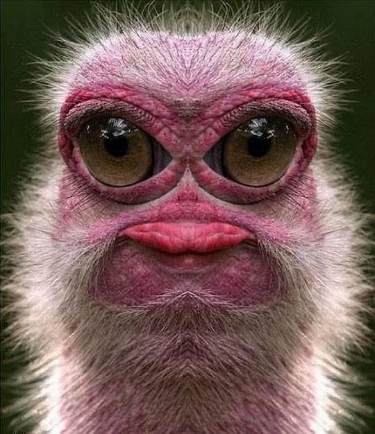 Animale-amuzante-dragute-si-ciudate64
