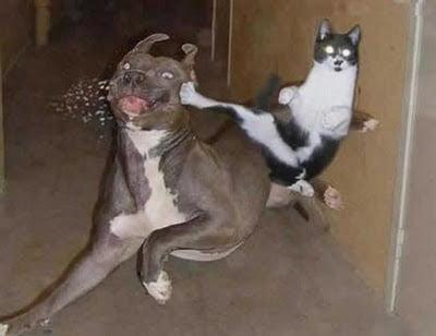 Animale-amuzante-dragute-si-ciudate8