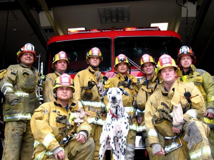 Cainele pompier Foto: www.kurgoblog.com
