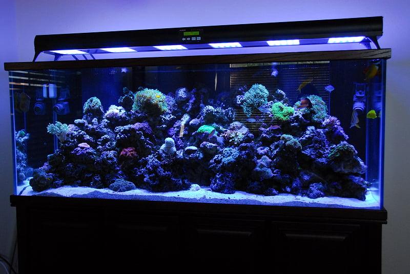 Iluminarea acvariului Foto: edgodanimal.wordpress.com