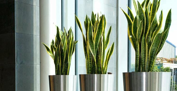 Plantele de interior, Foto: grasstou.com