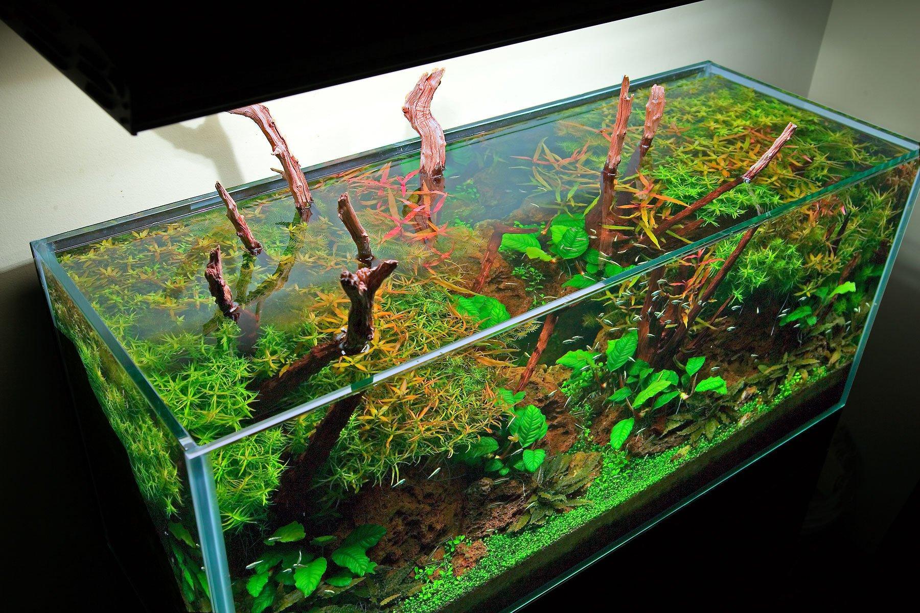 Acvariu Foto: www.aquariumdesigngroup.com