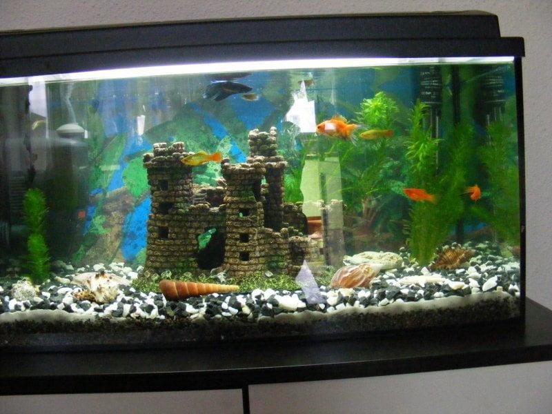 Adaposturi pentru pestii dintr-un acvariu Foto: www.acvariidevis.ro