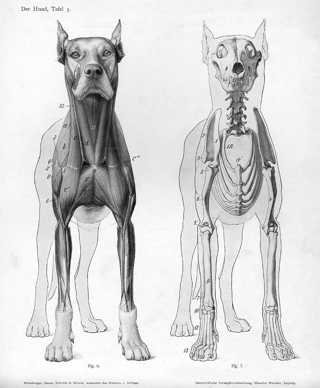 Anatomia cainilor Foto: imgur.com