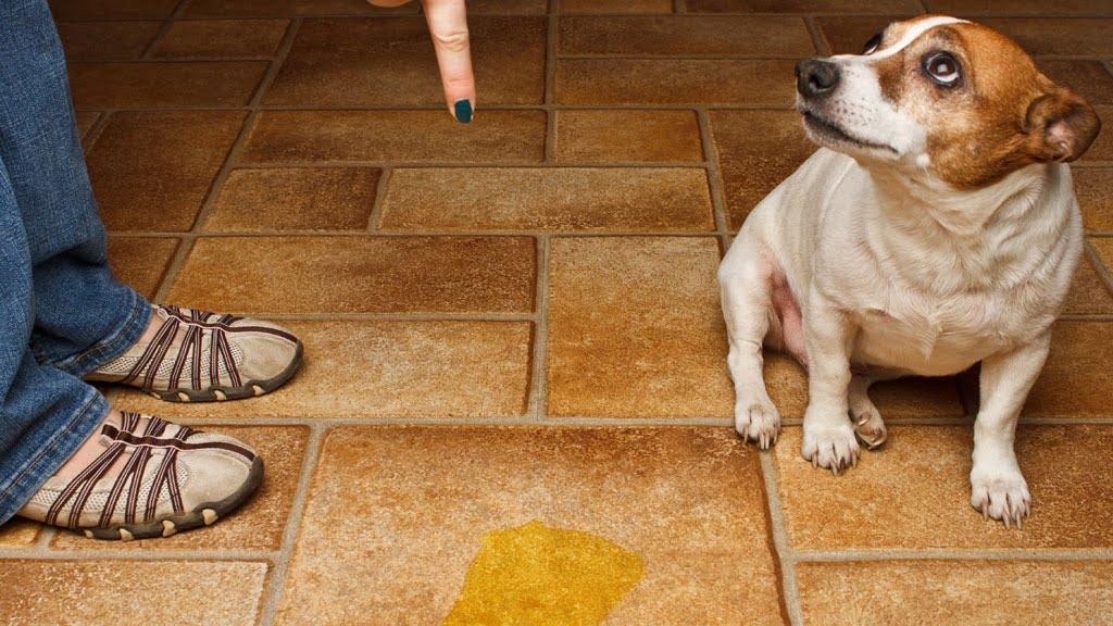 Cainele Foto: dog-urine.com