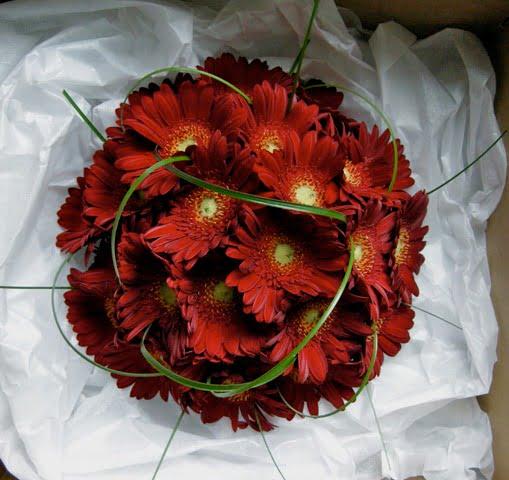 Buchet-din-gerbere-de-culoare-rosie