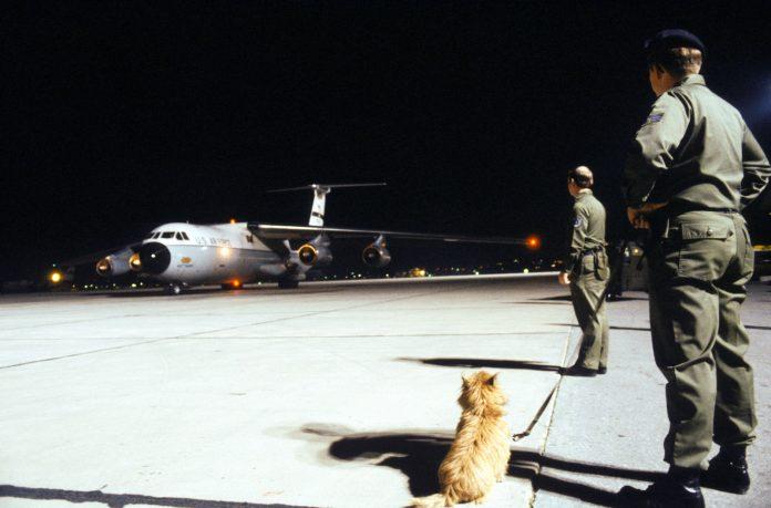 Cum se comportă câinii în avion și ce ar trebui să știe stăpâni lor