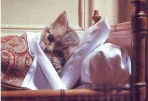 Cum stii daca pisica ta este bolnava - Pisica tuseste sau respira greu