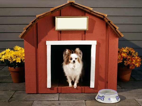 Casa pentru caine Foto: pets.iloveindia.com