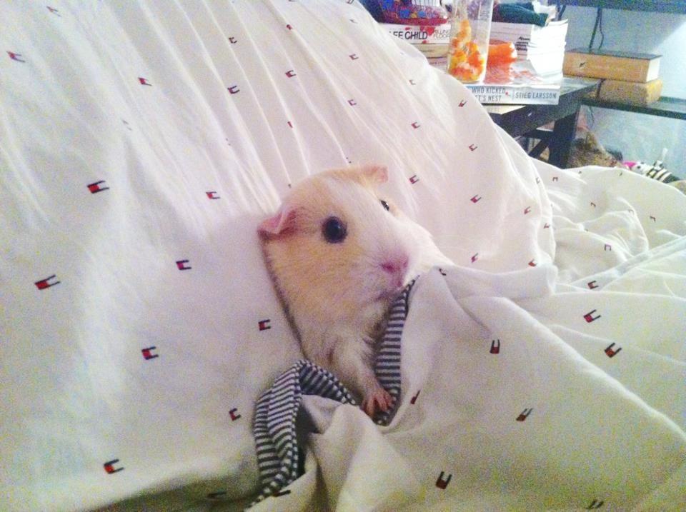 Hamster bolnav Foto: www.quickmeme.com