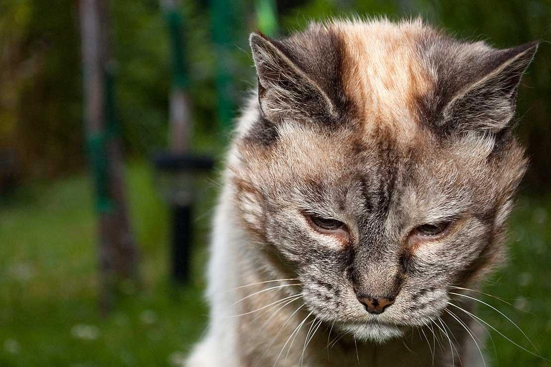 pisica bolnavioara