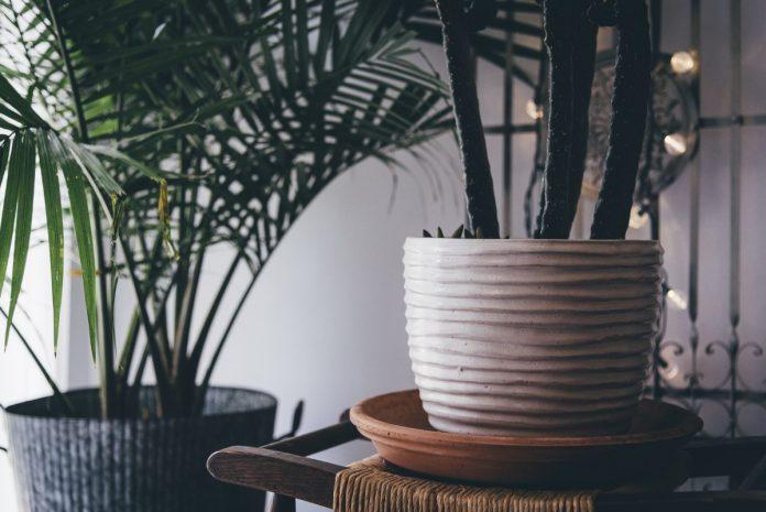Plante de interior decorative - condiții de iluminare și îngrijire