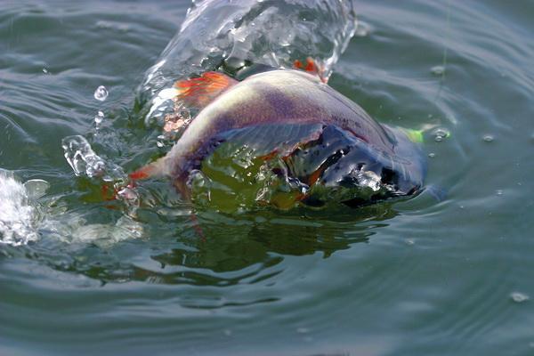 Pescuitul la biban Foto: www.aventurilapescuit.ro