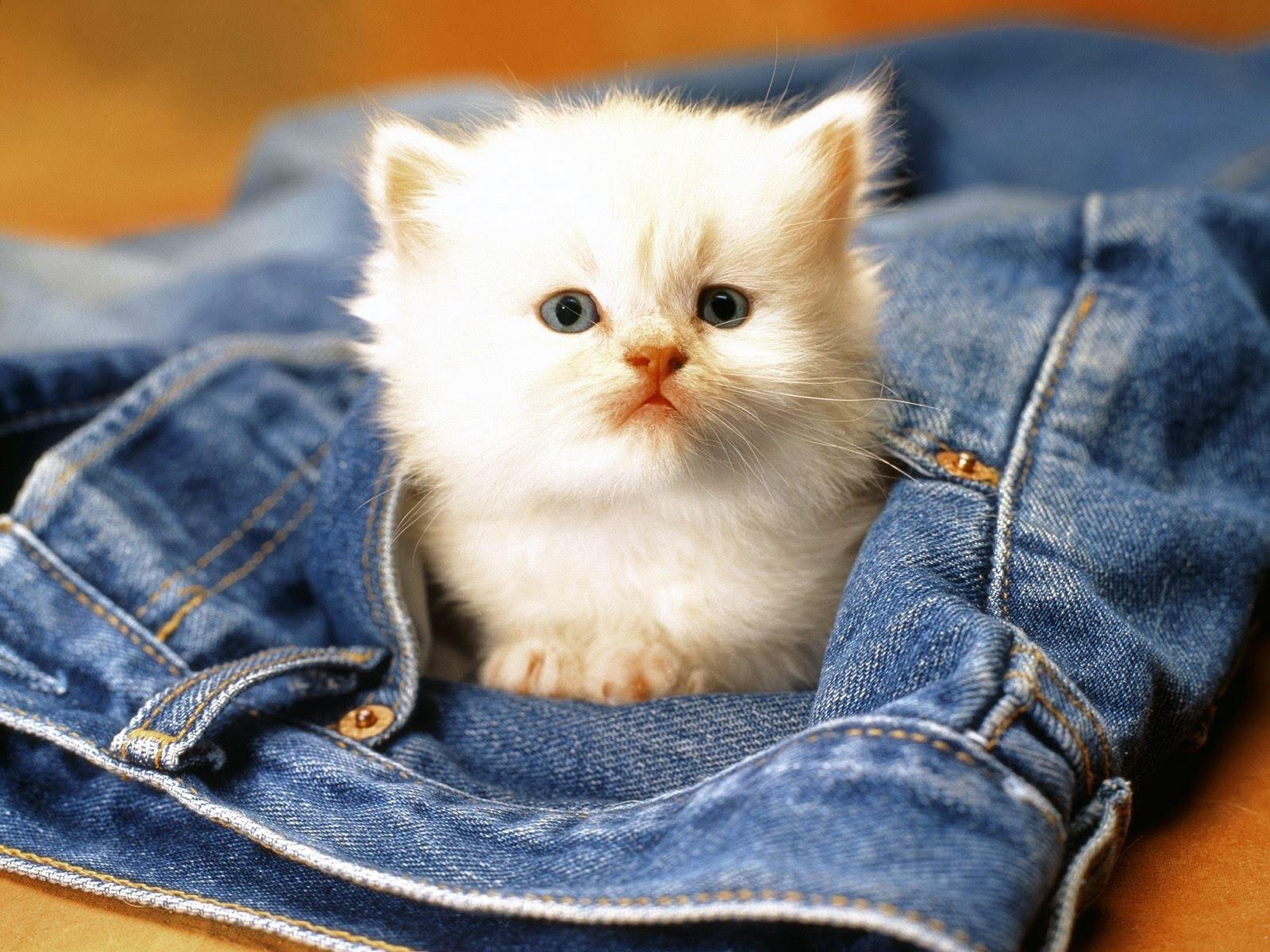 Pui de pisica Foto: fun.bzi.ro