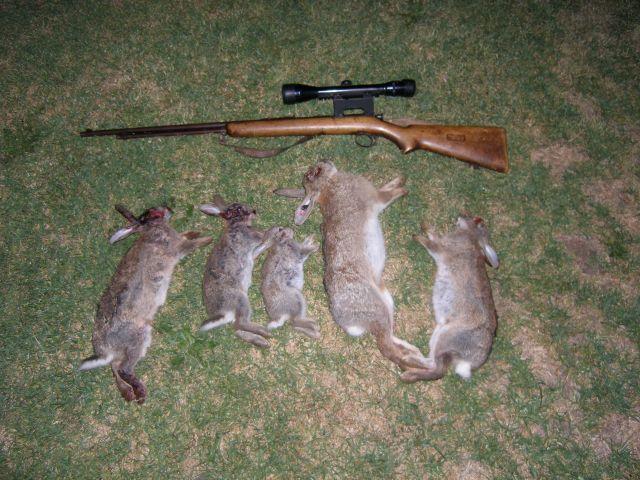 Vanatoarea de iepuri Foto: www.swpastandpresent.com