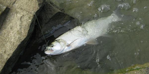 Pescuitul la avat Foto: www.ifish.ro
