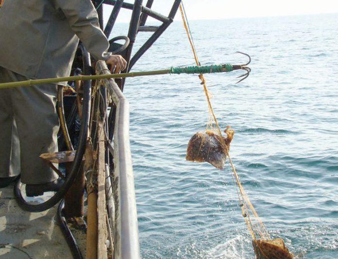 Pescuitul la calcan Foto: observator.ro