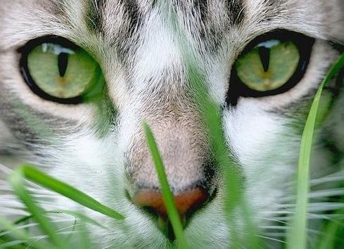 Pisica, Foto: catgrasscolombia.blogspot.ro