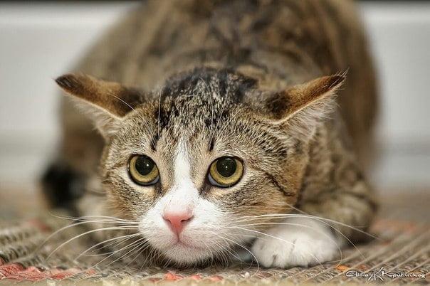 Pisica stresata Foto: vk.com
