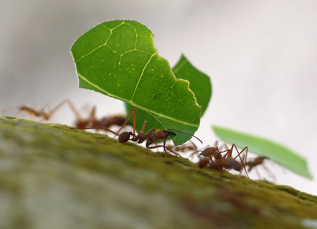 Furnici, Foto: thebugenthusiast.com