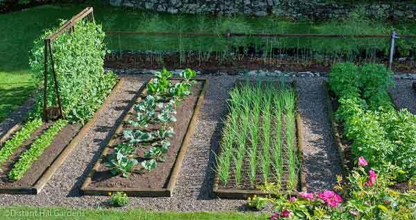 Gradini de legume, Foto: chilegreenhouses.cl