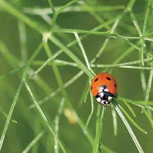 protejare gradina insecte