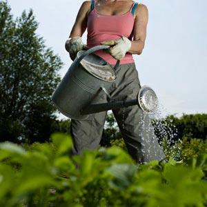 protejarea gradinii pesticid