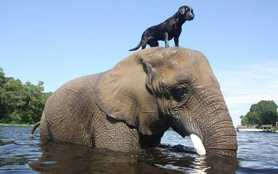 Elefant si caine Foto: ftp.samaylive.com
