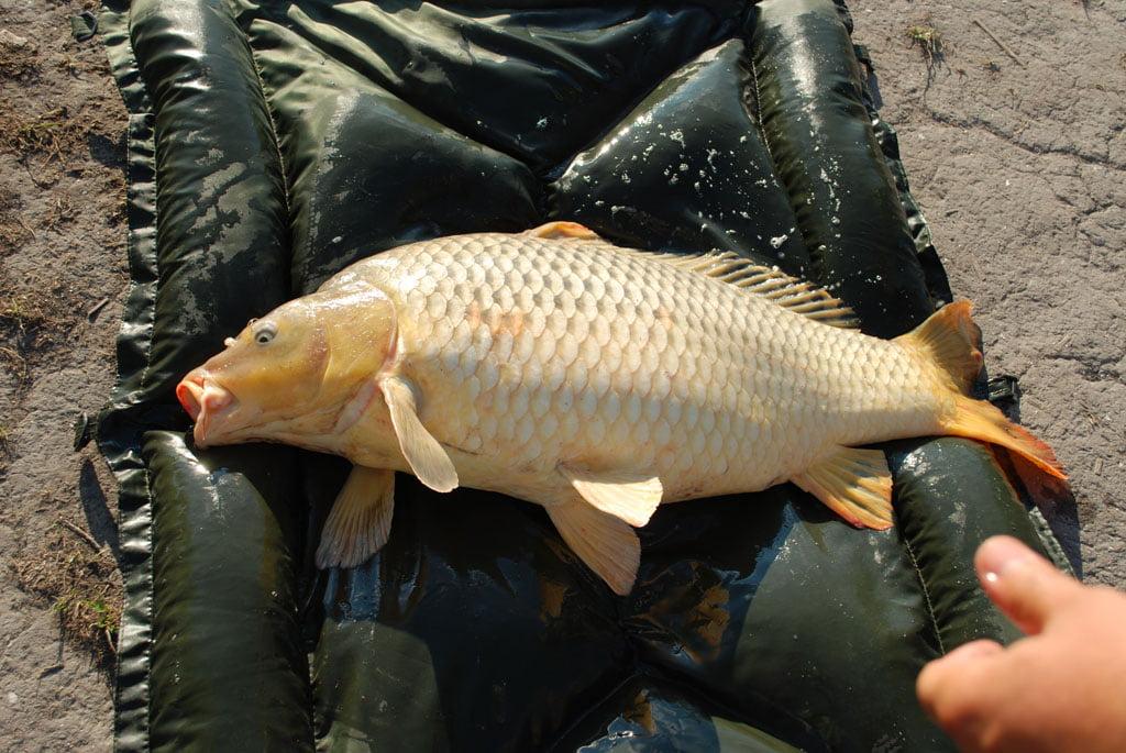 Balta-de-pescuit-Ozetanya-Ungaria-42