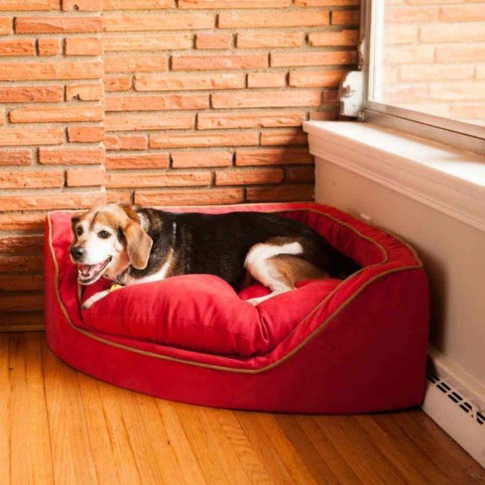 Coltul cainelui in locuinta, Foto: snoozerpetproducts.com