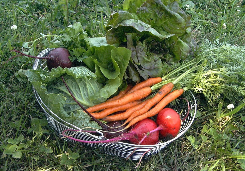 Culegerea corecta a legumelor din gradina, Foto: irvingparkgardenclub.wordpress.com