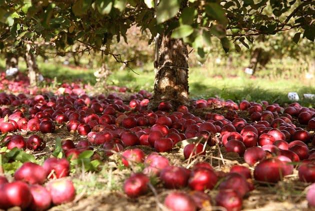 Ghid pentru recoltarea fructelor, Foto: bitlanders.com