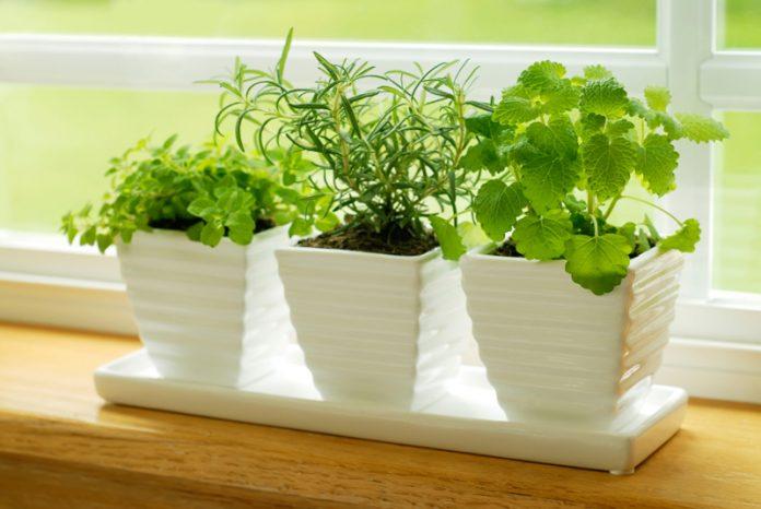 Plante medicinale in ghiveci, Foto: homenewconcept.com