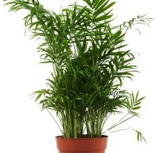 plante interior