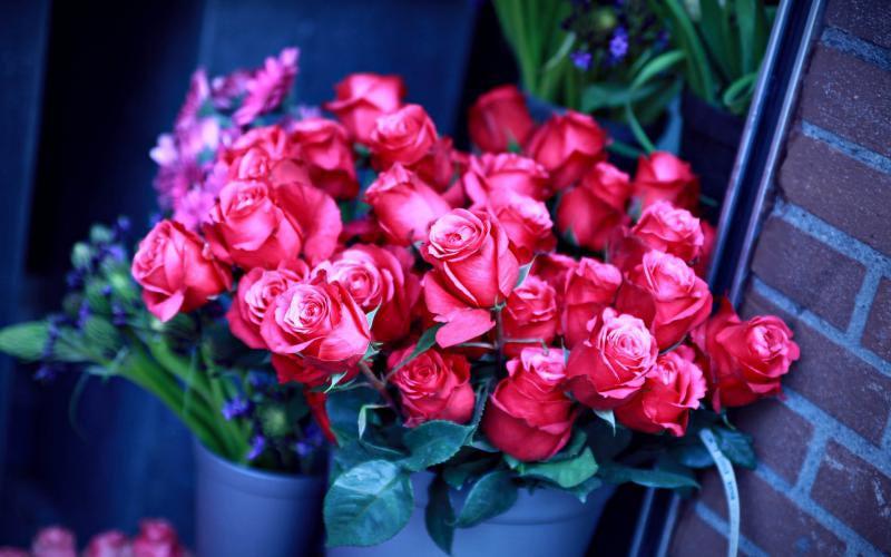 Aranjamente florale mai rezistente, Foto: irecommend.ru