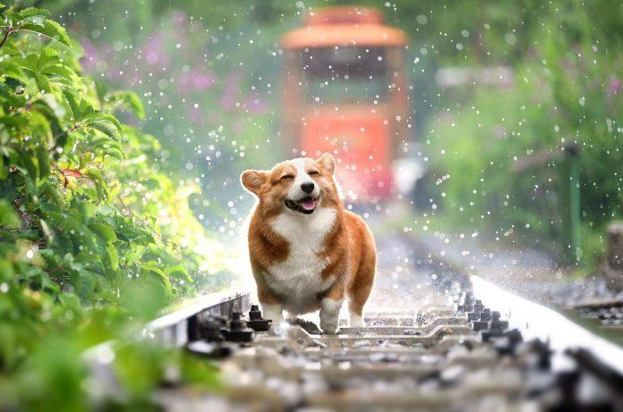Curiozități despre câini - află lucruri interesante despre cel mai bun prieten al omului