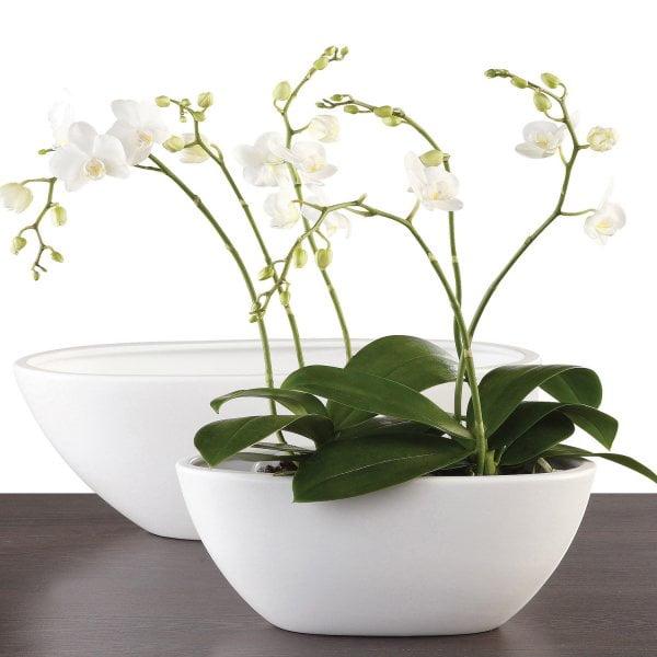 Ingrijirea orhideei, Foto: twigzzdesignstudio.com