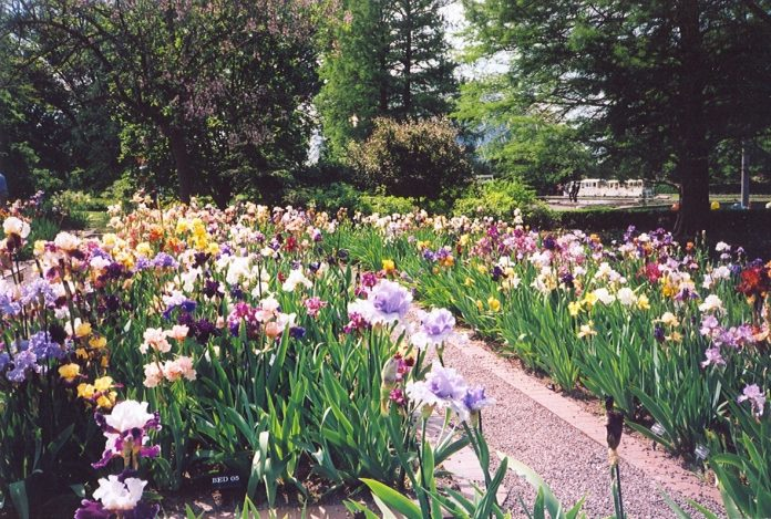 Irisul, Foto: nezabravkaflowers.com