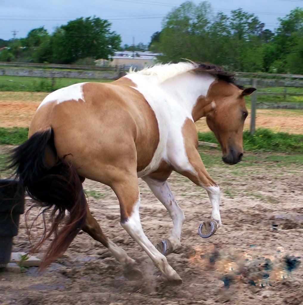 Rabies In Horse - HD1763×1774