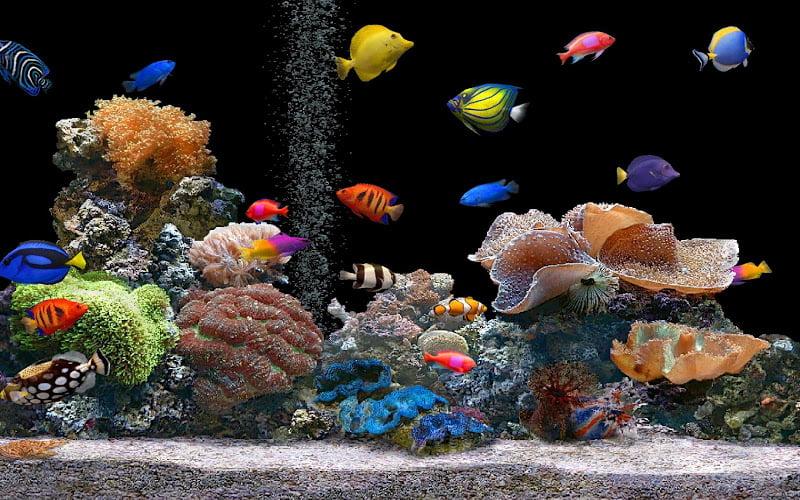 Pestisorii de acvariu Foto: www.pouted.com