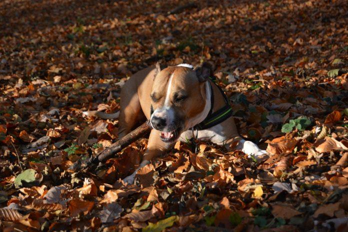 Diareea la câini, ce probleme de sănătate arată aceasta și cum se poate trata